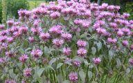 Bee Balm Flowers 30 High Resolution Wallpaper