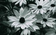 Black Flowers Hd  3 High Resolution Wallpaper