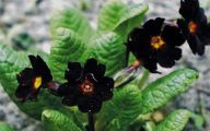 Black Flowers Images  7 Free Wallpaper