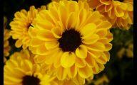 Black Flowers Pictures 10 Desktop Background