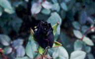 Black Flowers Pictures 4 Desktop Wallpaper