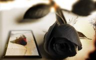 Black Flowers Pictures 6 Cool Hd Wallpaper