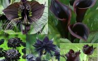Black Flowers Pinterest 22 Background Wallpaper