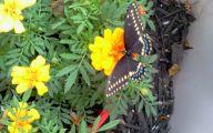 Black Flowers Pinterest 26 Background Wallpaper