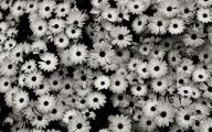 Black Flowers Pinterest 30 Free Hd Wallpaper