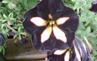 Black Flowers Pinterest 5 Free Hd Wallpaper