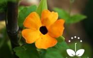 Black Flowers Plants 11 Free Hd Wallpaper