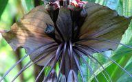 Black Flowers Plants 26 Hd Wallpaper
