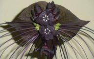 Black Flowers Plants 30 Cool Wallpaper