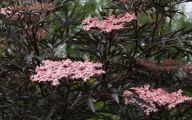 Black Flowers Plants 31 Free Wallpaper