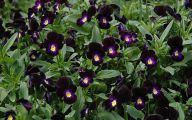 Black Flowers Plants 7 High Resolution Wallpaper
