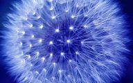 Blue Dandelion 15 Background
