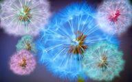 Blue Dandelion 8 Desktop Background