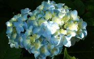 Blue Flowers For Floral Arrangements  2 High Resolution Wallpaper