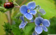 Blue Flowers Hd Wallpapers  33 Widescreen Wallpaper