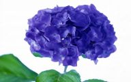 Blue Flowers Hd Wallpapers  36 Background