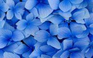 Blue Flowers Hd Wallpapers  41 Cool Hd Wallpaper