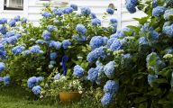 Blue Hydrangea 17 Background Wallpaper