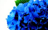 Blue Hydrangea 4 Background