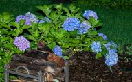 Blue Hydrangea 5 Hd Wallpaper