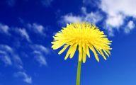 Blue Yellow Flowers  2 Widescreen Wallpaper