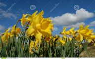 Blue Yellow Flowers  21 High Resolution Wallpaper