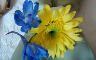 Blue Yellow Flowers  28 Cool Hd Wallpaper