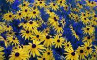 Blue Yellow Flowers  31 High Resolution Wallpaper
