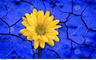 Blue Yellow Flowers  42 Free Hd Wallpaper