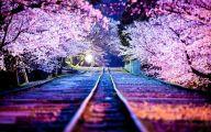 Cherry Blossoms 1 Hd Wallpaper