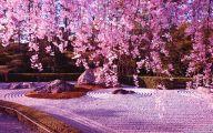 Cherry Blossoms 18 Widescreen Wallpaper