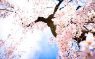 Cherry Blossoms 29 Hd Wallpaper