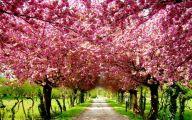 Cherry Blossoms 4 Cool Hd Wallpaper