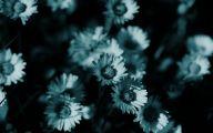 Dark Flowers  69 Wide Wallpaper