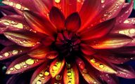 Dark Flowers  86 Widescreen Wallpaper