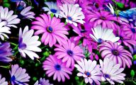 Dark Flowers Names  11 Wide Wallpaper