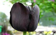 Dark Flowers Names  9 Desktop Background