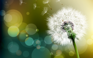 Flower Wallpaper Dandelion 17 Cool Wallpaper