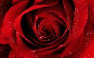 Flower Wallpaper Rose  2 Widescreen Wallpaper