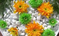 Green Dahlia Flowers  29 Cool Wallpaper