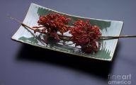 Green Dried Flowers  1 Free Hd Wallpaper