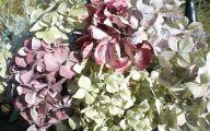 Green Dried Flowers  24 Hd Wallpaper