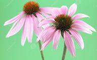 Green Echinacea Flowers  1 Cool Wallpaper