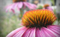 Green Echinacea Flowers  16 Widescreen Wallpaper