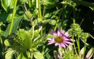 Green Echinacea Flowers  29 Cool Hd Wallpaper