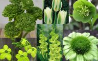 Green Envy Flowers  10 High Resolution Wallpaper