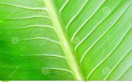 Green Exotic Flowers  35 Cool Hd Wallpaper