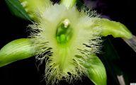Green Flowers For Garden  10 Widescreen Wallpaper