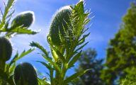 Green Flowers For Garden  31 High Resolution Wallpaper
