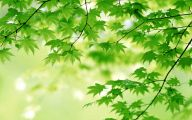 Green Flowers Images  26 Desktop Wallpaper